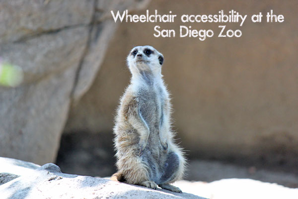 San Diego Zoo Wheelchair Accessibility and Special Needs