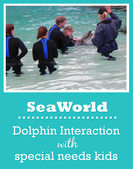 sea world dolphin interaction program special needs